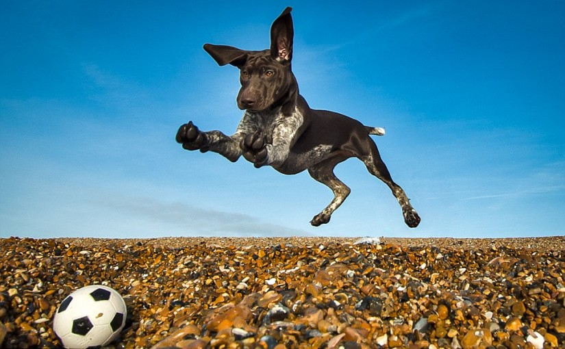These Photos Just Won An Award For A Reason. Oh, And They Include Dogs… So Click.