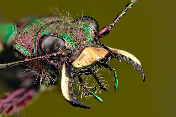 Once you get over your heebie jeebies, you may see that these insects are quite amazing.