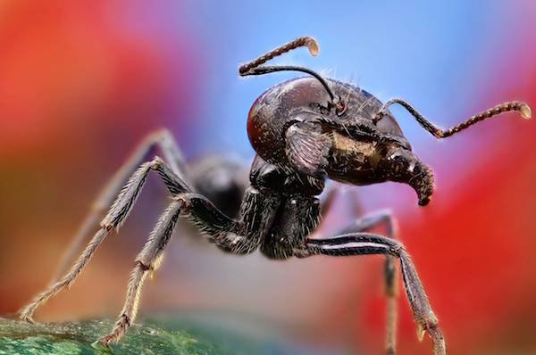 """This ant says """"SMILE!"""""""