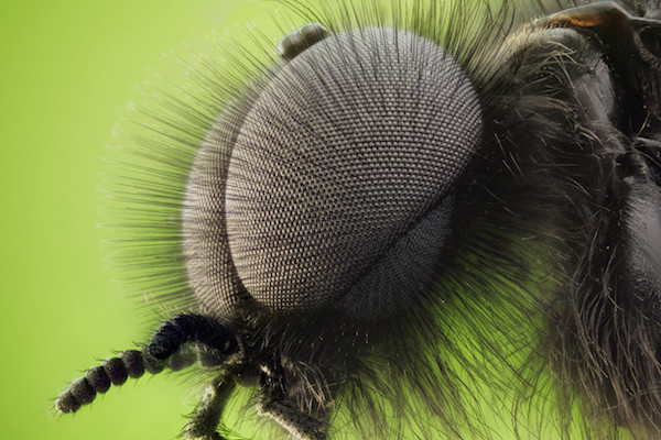 Who knew that a bug could be so fuzzy?