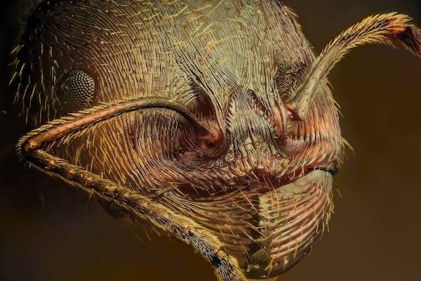 The macro photos of insects aren't always beautiful. Some are terrifying, no matter how close up you get.