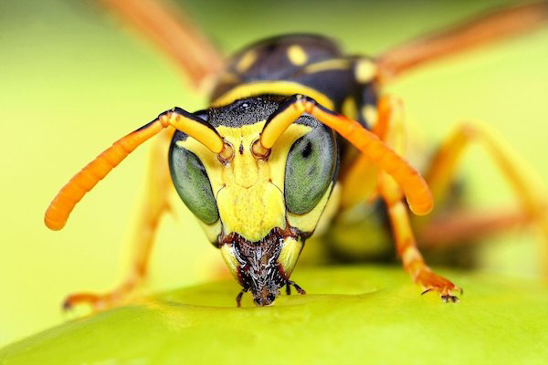 This Changes Absolutely EVERYTHING I Thought About Insects. I'll Never Swat One Ever Again.