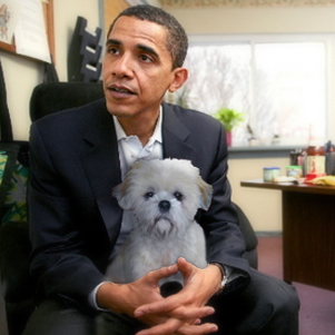 Lapdogs swoon! Non-lapdogs guess Obama's next Egypt move (snort)