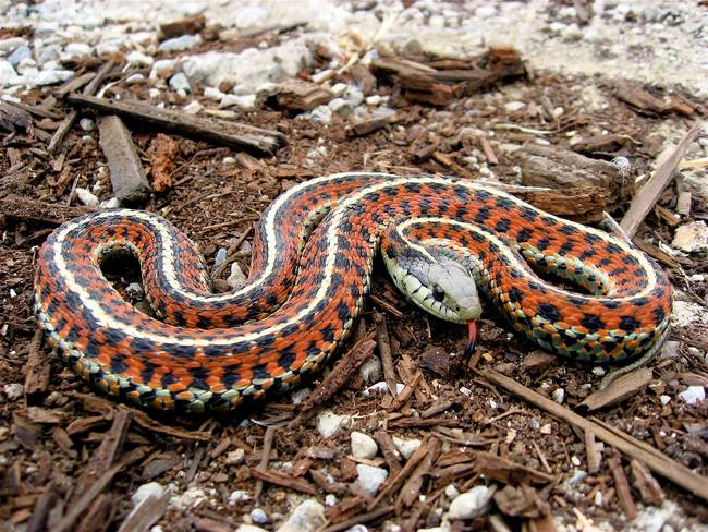 5.) One theory that follows the path of the Ebola outbreak is that an evil snake cursed someone in Guinea, who then infected people in Sierra Leone, who then...you get the picture.