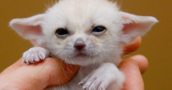 Never Fear, These Baby Animals Have Arrived to Cheer You Up.