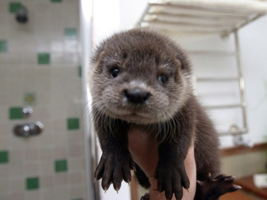 20.) Otter-ly cute.