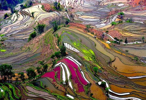 27.) Terrace rice fields (China)